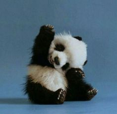 Ok. This is one animal that I would love to have. The pic is courtesy of Grace Yee.