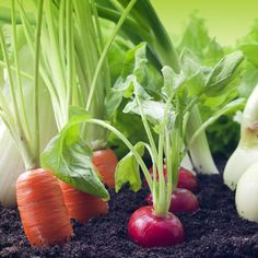 Enjoy home-grown edible garden plants from your raised bed garden or fresh from your yard. Vegetable plants, herb plants, fruit trees and fruit plants let you enjoy farm-to-table dining in your own home. Fruit Plants, Edible Plants, Edible Garden, Backyard Garden Landscape, Backyard Landscaping, Garden Plants, Backyard Ideas, Garden Ideas, Planting Vegetables