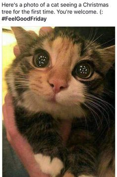 Funny Animal Pictures Of The Day – 30 Pics – Lovely Animals World Lustige Tierbilder des Tages – 30 Bilder – Schöne Tierwelt Cute Funny Animals, Funny Animal Pictures, Cute Baby Animals, Funniest Animals, Funny Photos, Cute Love Pictures, Farm Pictures, Funniest Photos, Cute Animal Memes