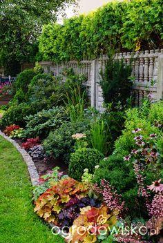 Ogrodowa przygoda Łukasza :) - strona 369 - Forum ogrodnicze - Ogrodowisko