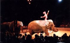 Mexico City Bans Circus Animals in Shows / AGAIN U.S. takes back seat to other countries