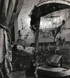 Photo by Robert Doisneau Robert Doisneau, Henri Cartier Bresson, Matt Hardy, George Brent, Legion Of Honour, Curious Creatures, French Photographers, Cute Baby Pictures, Bette Davis