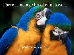 Indoor/outdoor breeding facility for parrots and exotic birds, parrot sales, care and information. Pretty Birds, Love Birds, Beautiful Birds, Animals Beautiful, Cute Animals, House Beautiful, Funny Animals, Parrot Wallpaper, Animal Wallpaper