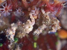 Watch: How the seahorse got its shape | @GrrlScientist