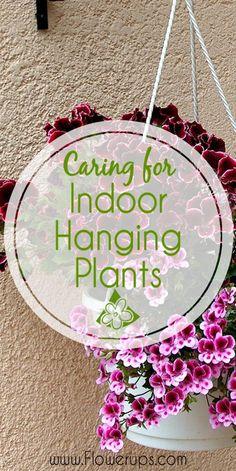 How to care for indoor hanging plants. Helpful info for indoor gardening