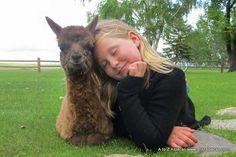 Alpaca cuddles