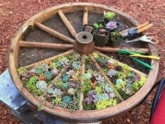 Upcycle a Wagon Wheel into a Herb or Succulent Garden. You will this easy and creative idea! Herb Garden Design, Diy Herb Garden, Garden Beds, Garden Spaces, Succulents Garden, Planting Flowers, Succulent Plants, Garden Planters, Amazing Gardens