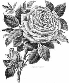 flower5.dtt.jpg 1,332×1,600픽셀