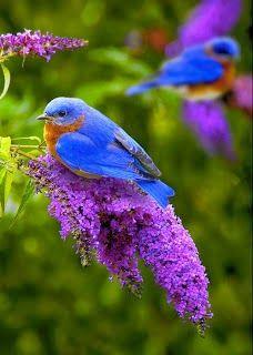 Bilder von Exotische Vögel der Welt.