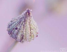 B l u m e n - F r a u e n #rosa #Knospe #Macro #Tropfen #Blume #Natur #closeup #flower #pink #diamonts