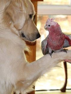 Friends...unlikely friends,Friends just the same.