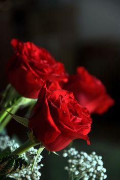 Valentine's Day | Red roses | Valentine's day ideas