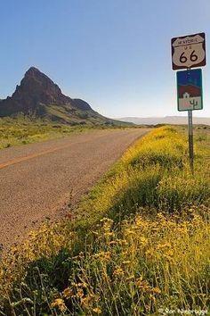 Wildflowers bloom along historic Route 66 near Oatman, Arizona. by charmaine