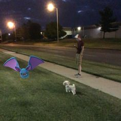 @justinspangenberg walked #olliethepuppy while I walked my #zubat #pokemongo