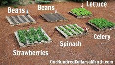 Share Tweet + 1 Mail This year I will be planting a large salad garden, and I thought it would be fun to grow ...