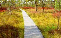 Boardwalk at Saco Heath, visit a rare peat bog Thing 1, Peat Moss, Preserves, New England, Acre, Woodland, Places To Go, Hiking