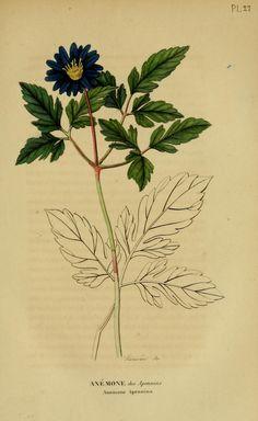 v.6 (1837-1838) - Annales de flore et de pomone : - Biodiversity Heritage Library