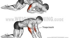 Kneeling bodyweight triceps extension exercise instructions and video Triceps Workout, Plank Workout, Workout Guide, Workout Challenge, Good Back Workouts, Fun Workouts, Training Workouts, Bodybuilder, Fitness Gym