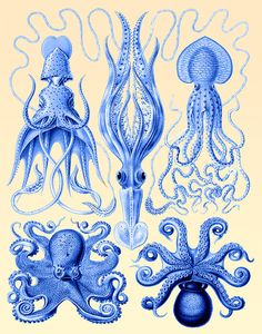 Squid and Octopus Blue print Nautical print beach by NauticalNell, $15.00