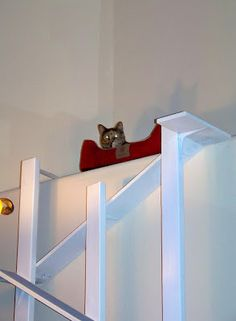 7 best Cat tree/ladder ideas images on Pinterest   Cat ladders, Cat Tiny House Design Cats Html on small house cats, tiny dogs, modern cats, fluffy house cats, family cats, garden cats, very large house cats, painting cats, apartment cats, big big house cats, books cats, tree cats, cute house cats, tall house cats, pretty house cats, greene cats, stuff cats, huge house cats, very big house cats, california cats,