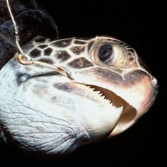 Cartels, Illegal Fishing or Turtle Protection CR?