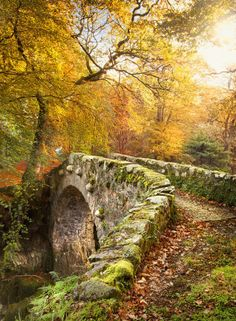 Foleys Bridge in Autumn at Tollymore Forest Park in Co Down Northern Ireland.