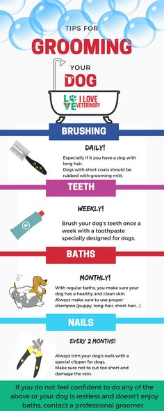 Veterinary pick up lines vet tech pinterest veterinary tips for grooming your dog fandeluxe Images