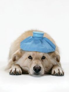 Reduce Vet Costs with Home Remedies for Pets