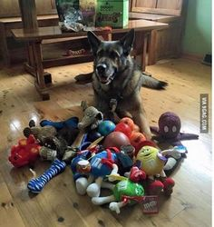 This police dog was given retirement presents by the community on his last day on the work