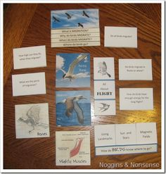 Free Apologia Lapbook for Flying Creatures of the 5th Day ch 4