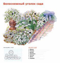 клумба с пионами схема: 12 тыс изображений найдено в Яндекс.Картинках
