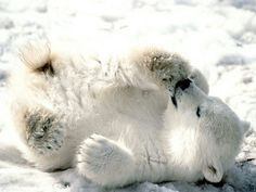 ❄️Baby polar bear. aww❄️
