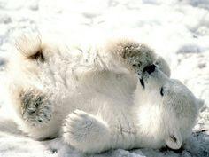 ❄️Baby polar bear. aww❄️
