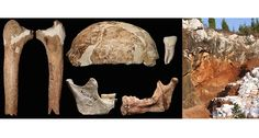 Controversial Chinese leg fossil may point to hybrid humans 14,000 years ago.