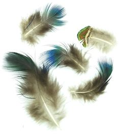 Peacock Plumage, Natural Mix - 1/2 ounce Turkey Feathers, Pheasant Feathers, Ostrich Feathers, Peacock Feathers, Feather Fashion, Peacock Bird, Thing 1, Feather Hat, Ranges