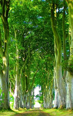 A tree-lined road near Ballymoney, Ireland by Katie Russell