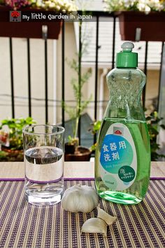 How to make aphid repellent garlic spray