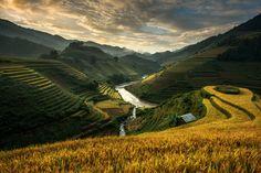 Photograph Rice terrace (Mu cang chai , vietnam) by sarawut Intarob on 500px