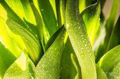 Green - 8 Mar - 365 Photos - 365Gallery - Capture Your 365