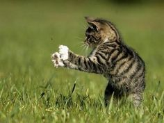 Kitten trying to catch a bug