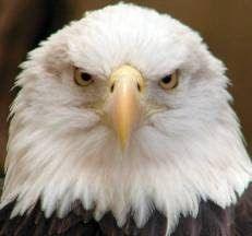 ANIMAIS SELVAGENS: Outubro 2012                                                                                                                                                      Mais
