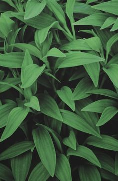 We think @OPPO might enjoy this one ;) #leaves #wallpaper #vertical #plants #green #mobile