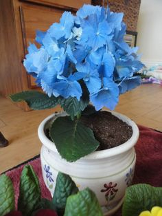 Extend your gardening season. Check out these great tips for growing houseplants.