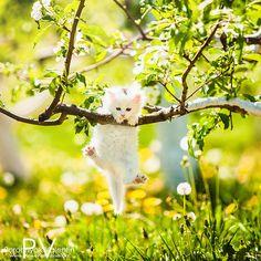 cutest white kitten <3 spring