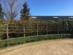 Hedges, Shapes, Plants, Living Fence, Plant, Shrubs, Planets, Natural Privacy Fences