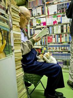 The Little Bookshop that Takes in Homeless Cats - Cats and books. They just go hand in hand, don't they? Like jam and toast. And at a small bookstore in Hong Kong, they only know it too well.