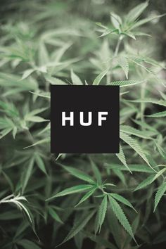 HUF - graphic element over pic