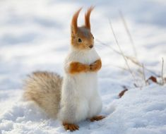 Prettiest squirrel of all time