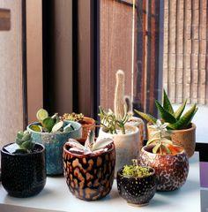 kearamiske krukker - kaktus