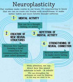 on Meditation & Mindfulness Neuroplasticity simplified. How to habits get wired in the brain & how can we rewire? How to habits get wired in the brain & how can we rewire? Brain Based Learning, Endocannabinoid System, Brain Science, Brain Food, E Mc2, Traumatic Brain Injury, Vestibular, Brain Health, Mental Health